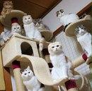 Представьте мир, где котики сами к вам приходят…