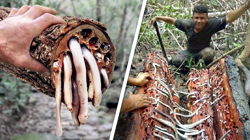 Es sah aus wie ein normaler Baum mit Würmern, aber eigentlich ist es was zu Essen!