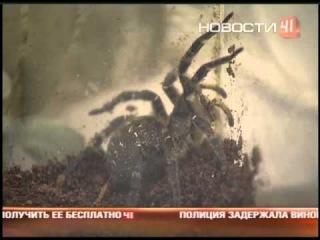 На Урале нашествие ядовитых пауков-гигантов