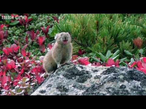 Funny Talking Animals - Walk On The Wild Side - Episode Six Preview - BBC One