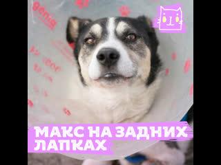 Мучения пса Макса снимали на телефон