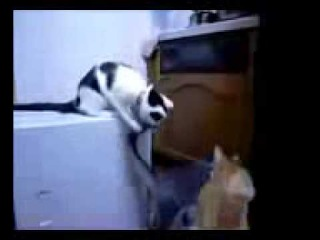 Ржачные приколы Самое ржачное видео в мире, короткие ролики Прикольные и смешные видеоролики 3