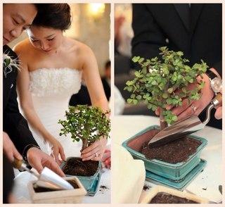 Какое дерево посадить в день свадьбы