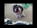 Собака орёт