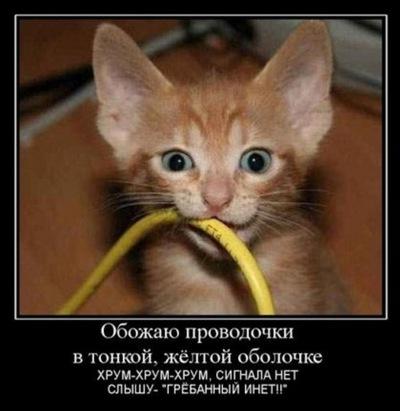 Аня Конева, 24 февраля , Челябинск, id137663608