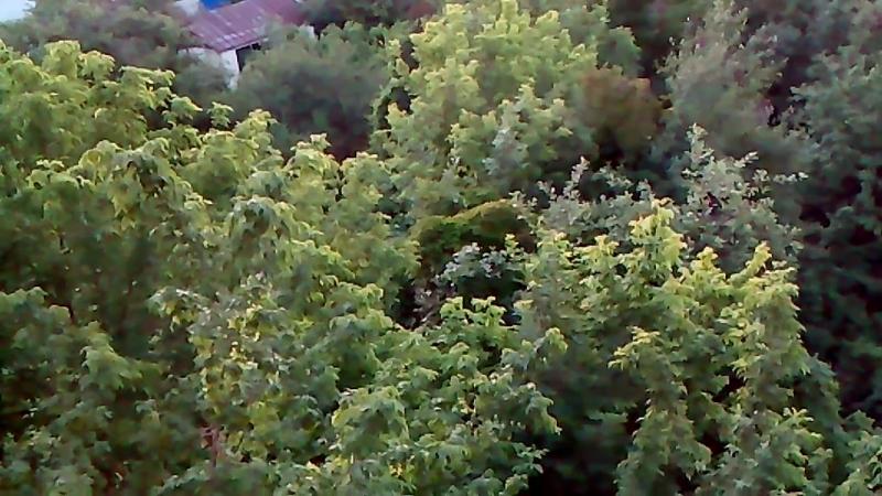 Утро...03.30 час 19 июня 18 г......соловьи под окном