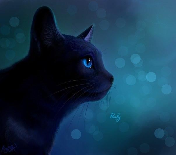 фото коты-воители синяя звезда