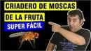 🐜🏠 Cómo hacer un criadero de moscas de la fruta casero en 10 minutos   Hormigas en casa ✅