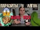 ПРОФИЛАКТИКА ПАРАЗИТОВ у амфибий Долой глистов