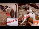 ПРИКОЛЫ С КОТАМИ И КОШКАМИ Подборка смешных и интересных видео с котиками и кошечками