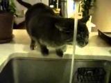 Эти коты взорвали весь интернет, ужасно смешно ЧАСТЬ 3