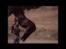 Прелесть Конь