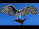 Animal Planet Largest Birds of Prey in the World Best Documentary