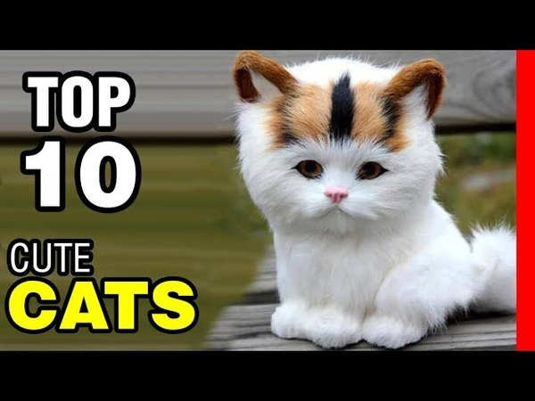 TOP 10 CUTEST CAT BREEDS