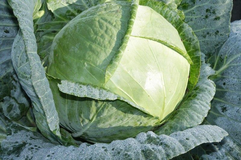 Фотоальбом «Осень - а что в саду и огороде»-Такой качанчик капусты