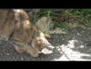 Кошка играет с ящеркой