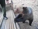 Смешные видео [1126]: Русских мужиков медведем не испугаешь