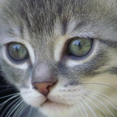 фото грустные котята крупным планом