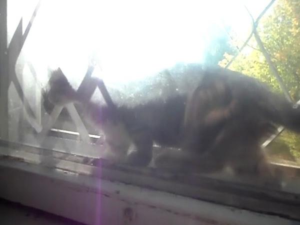 Котенок за окном