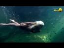 Jenny Scordamaglia - Nude UnderWater Swim with Fish on Vimeo