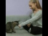 Умный котик