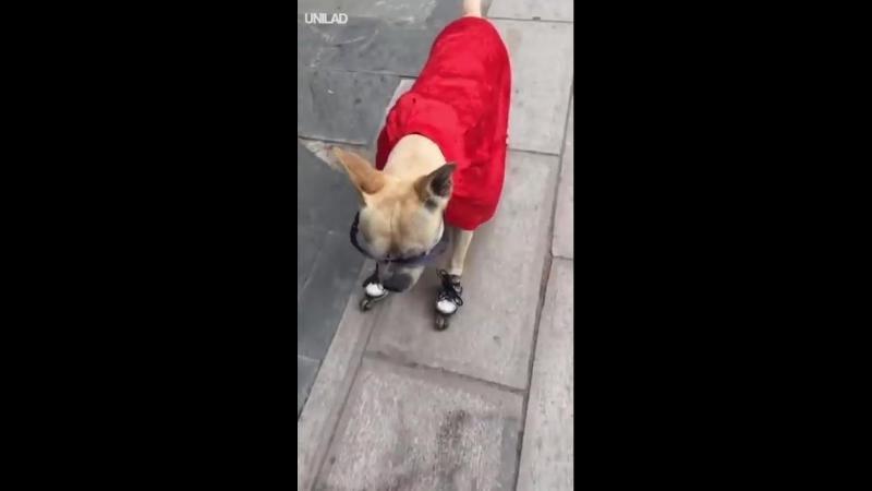 такого экстремального пса вы еще не видели