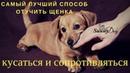 Самый лучший и самый быстрый способ - отучить щенка сильно кусаться и сопротивляться.