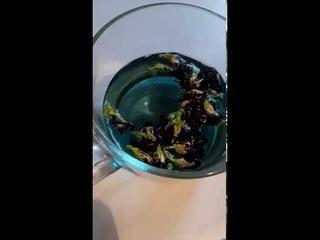 Тайский синий чай Анчан. Полезный чай для здоровья.