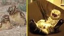 Понедельник день НЕ тяжелый совы няшки позитив на весь день