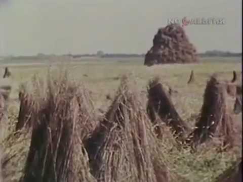 1987 й год. Уборка льна в Черниговской области.