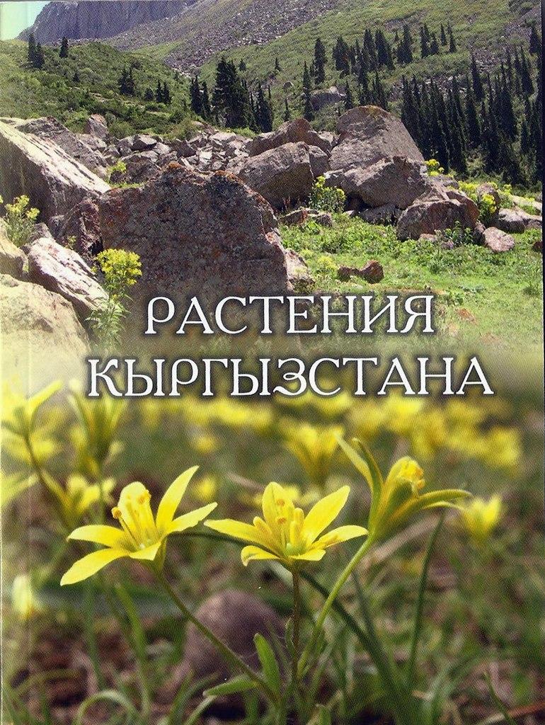 http://cs411630.userapi.com/v411630688/513/Iw7jAsBhs58.jpg