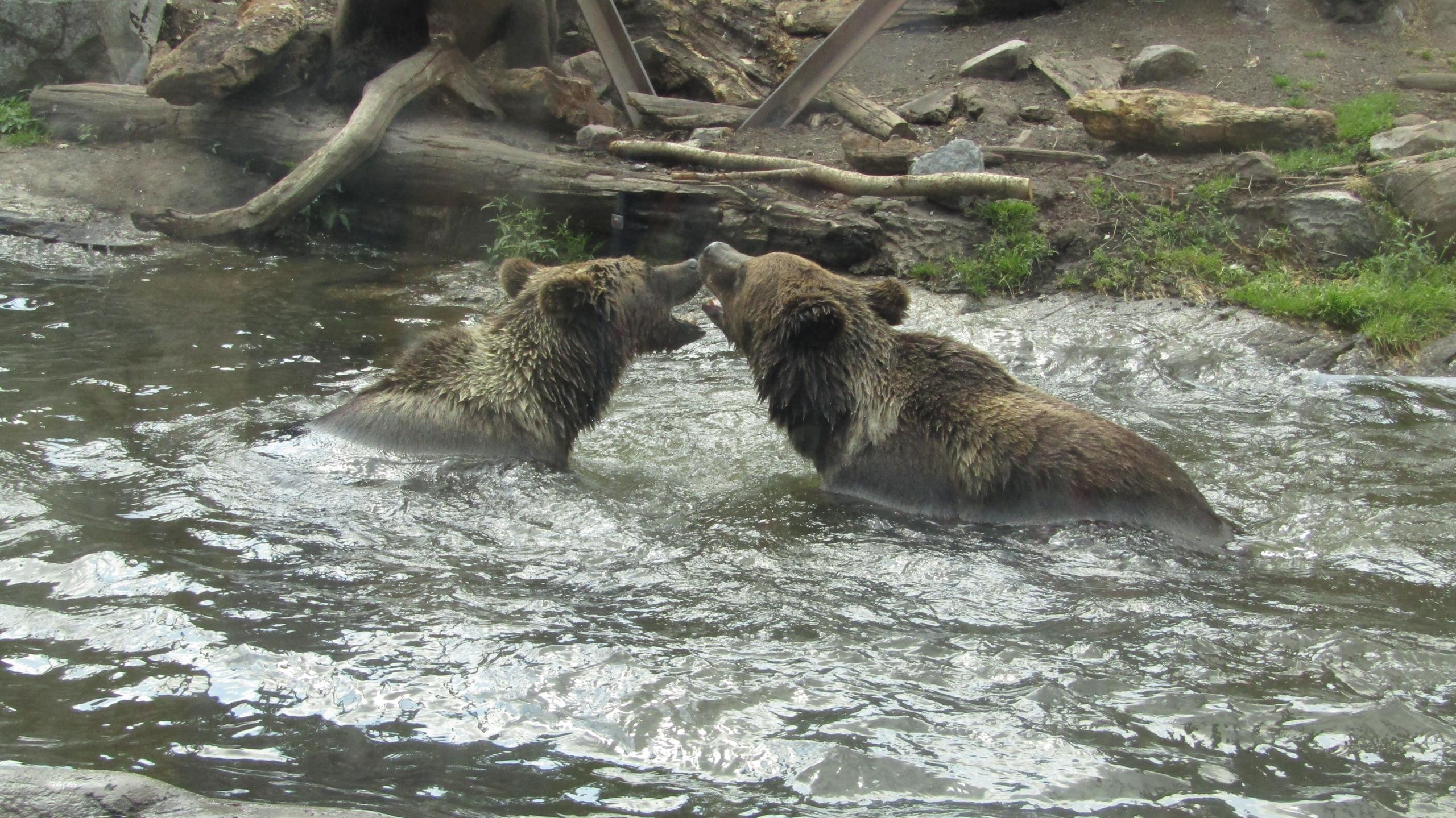 Завершая звериную тему: зоопарк в Скансене