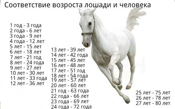 какими будет человек родившись в год лошади
