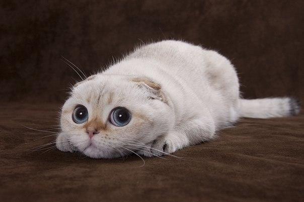 Милые Котята | VK: vk.com/club45245100