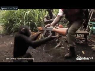 Негр отдал автомат Калашникова шимпанзе, своему меньшему брату!