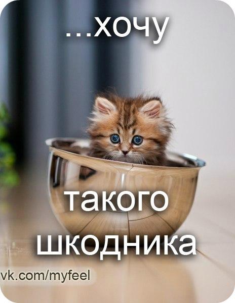 бурундуки приколы: