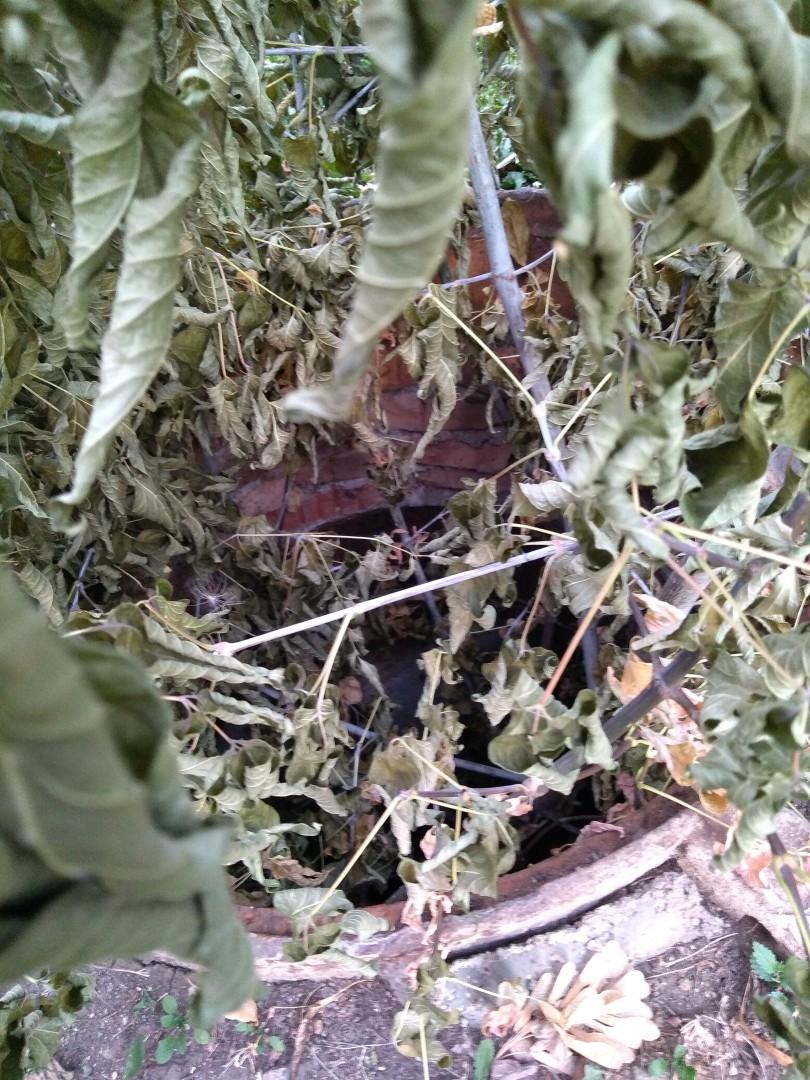 От подписчиков: «Во дворе дома по адресу Комсомольский проспект 86 открыт колодец на все обращения в администрацию его закрыть они просто насовали в него веток.