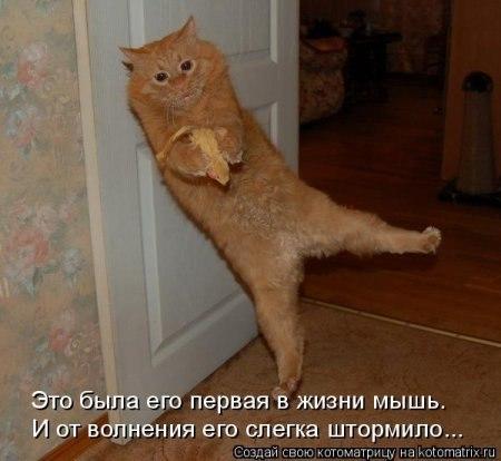 http://cs317326.vk.me/v317326696/5b59/rOKNsBraQDU.jpg