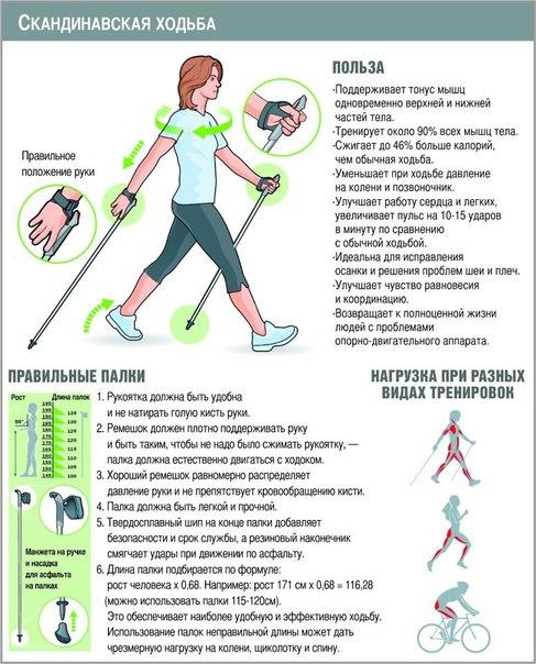 Скандинавская ходьба как сделать палки