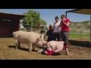 Man is very similar to a pig - Человек очень похож на свинью.mp4