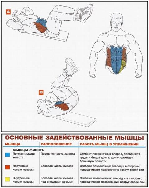 Упражнение для пресса и груди в домашних условиях