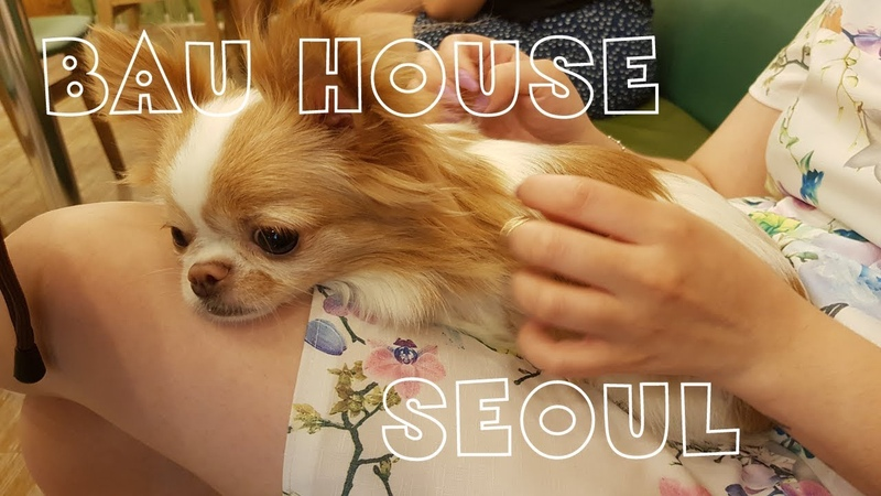 Самое милое место в мире BAU HOUSE, SEOUL