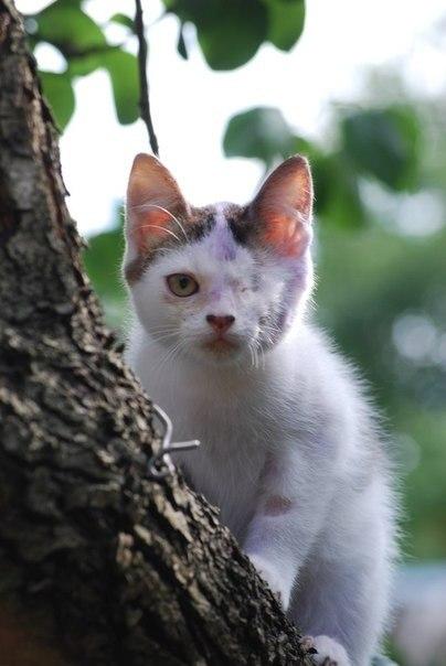 дата знакомства showflat php cat