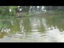 синхронное плавание в одиночку