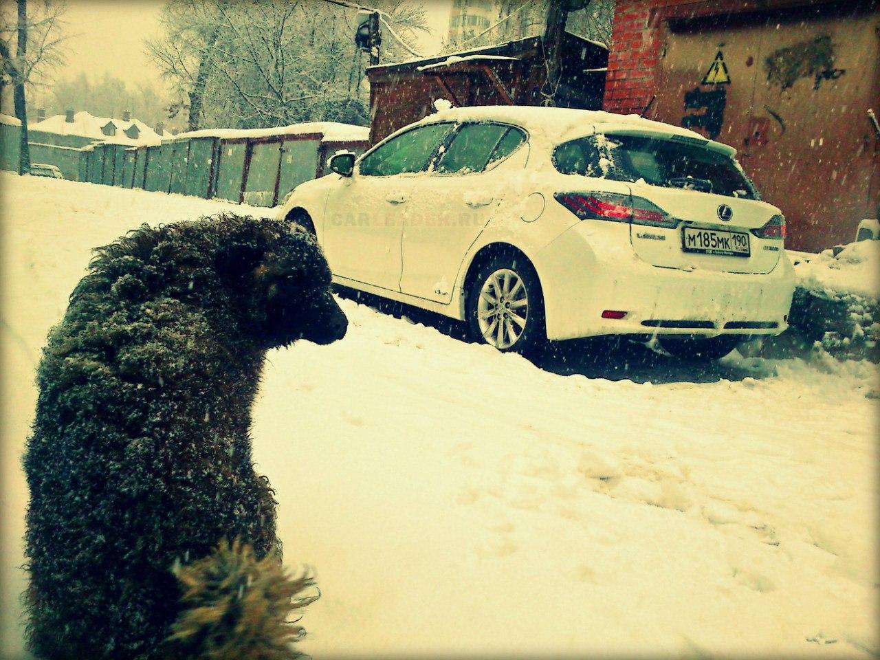Lexus в Люберцах