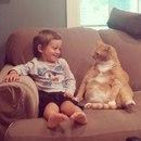 Бывший хозяин отказался от этого кота из-за того…