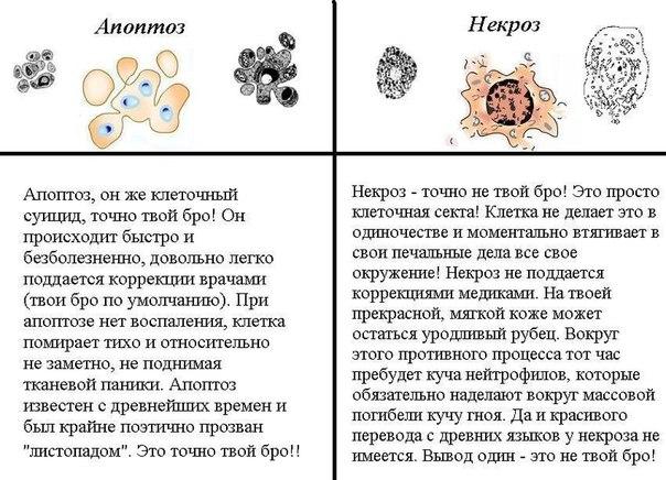 Кафедра патологической анатомии | Кировская ГМА