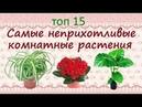 Самые неприхотливые растения для дома ТОП15