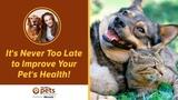 Никогда не поздно улучшить здоровье питомца It's Never Too Late to Improve Your Pet's Health!