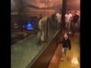 Türkei - Istanbul - Shisha-Bar hält lebendigen Löwen in Glaskasten